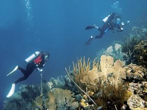 Paul & Cindy find Squid at Ladanias Dive Site