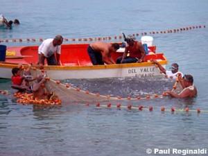 Netting the bait fish