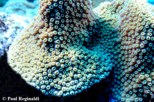 Beautiful Coral
