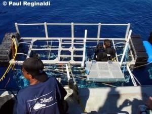 Diver Entering Cage