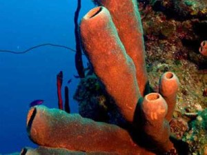 Tube Sponge Deep Dive