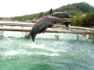 Dolphins at Training Pool