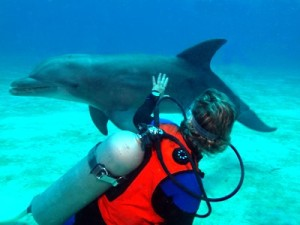 Cindy Petting Dolphin