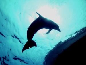 Dolphin at Boat