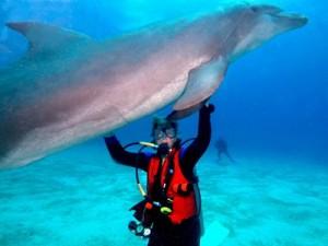 Cindy Under Dolphin