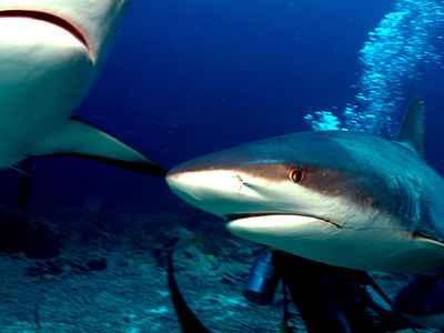 sharks-05