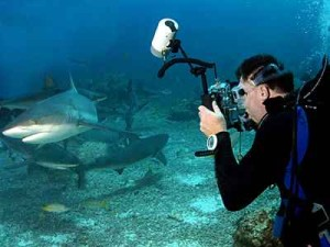 Paul Taking Pictures of Sharks