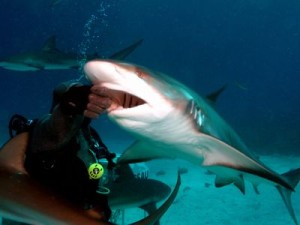 Feeding Shark