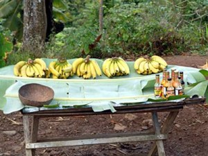 Bananas of St. Lucia